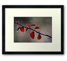 Autum 4066 Framed Print