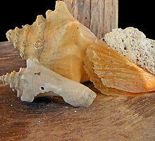 Shells and Coral  by John  Kapusta