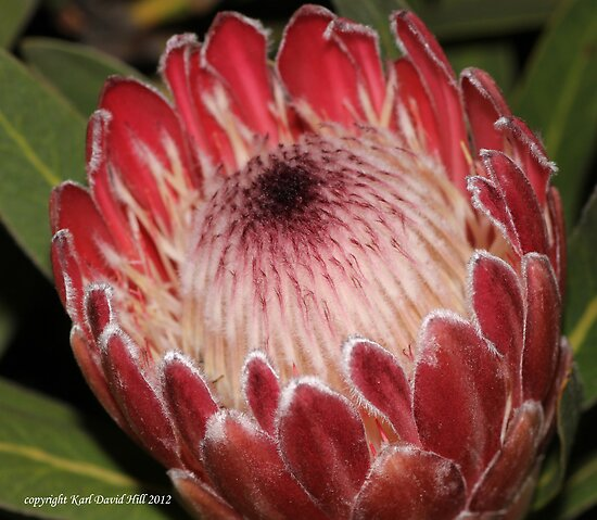 macro flora 011 by Karl David Hill