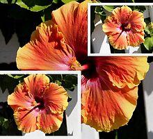 Orange Single Hibiscus Collage by alycanon