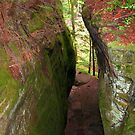 A Narrow Chasm by Laurel Talabere