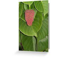 Forbidden Fruit Greeting Card