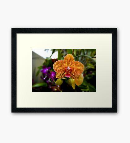 Orange Orchid Framed Print