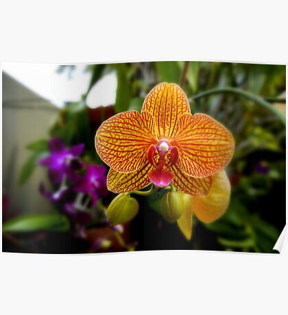 Orange Orchid Poster