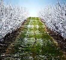 Frozen Trees by MarkWadrip