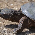 Moving At The Speed Of Turtle. by William Brennan
