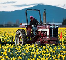 Skagit Valley Farming by Jim Stiles