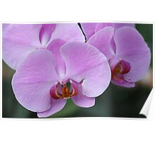 Natural Beauty, The Orchids Poster
