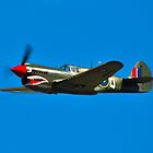 P-40N Kittyhawk by Tim Pruyn