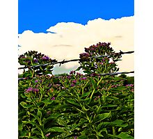 Flowers And Storms Photographic Print