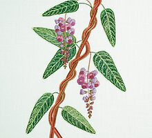 Native Lilac, Hardenbergia violacea  1998 by Wendy Sysouphat