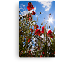 Sun poppies. Canvas Print