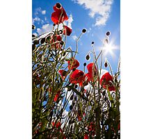 Sun poppies. Photographic Print