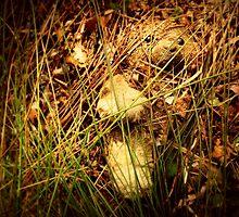 Little Bear Lost by Lea  Weikert
