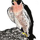 Falcon by Dawn B Davies-McIninch