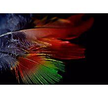 Fine Feathers Photographic Print