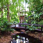 Rainforest in a City by GCBela