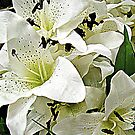 White with just a little black contrast - Lilies for sale! by Jane Neill-Hancock