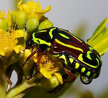 Psychedelic Beetle by Scott Weeding