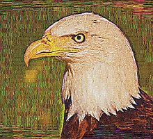 Bald Eagle Embroidered by Chris Thaxter