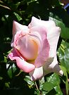 A Pale Pink Rose Bud by LoneAngel