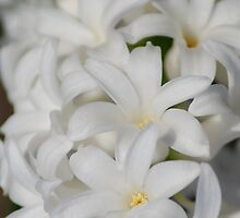 White Hyacinth by Mark McReynolds