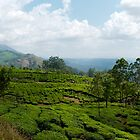 Munnar Tea Plantation Panoramic by Clive S