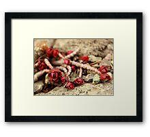 Flowers in a stone garden Framed Print