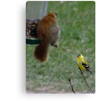 What kind of bird is that anyway? Canvas Print