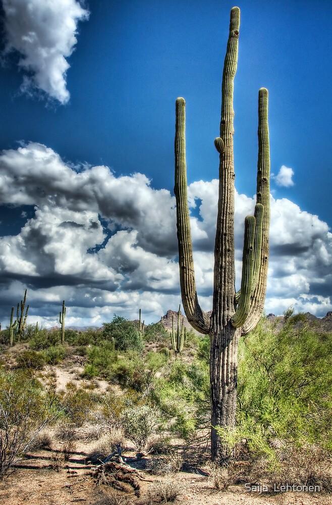 Desert Beauty  by Saija  Lehtonen
