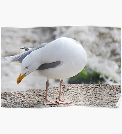 Squeaky Clean Herring Gull Poster