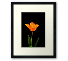 Tulip on black Framed Print