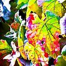 Rainbow vine  by M-A-K