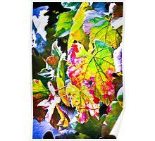 Rainbow vine  Poster