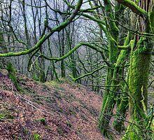 Mossy Trees near Porlock by JPassmore