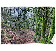 Mossy Trees near Porlock Poster
