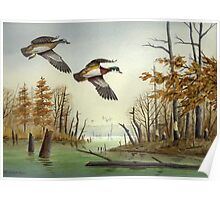 Paired Up: Wood Ducks Poster