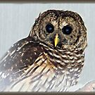 Hoot-i-ful by BShirey