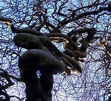 The Old Knotted Tree by Forfarlass