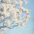 Budding blossoms by Angela King-Jones