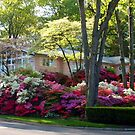 Azalea House, Alps Road, Wayne NJ by Jane Neill-Hancock