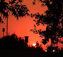 SILHOUETTED SUNSET by Sandra  Aguirre
