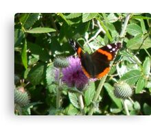Red Admiral on Thistle Canvas Print