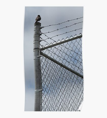Fence Sitter Poster