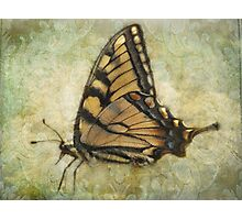 First Butterfly Photographic Print