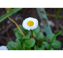 delicate little flower Photographic Print