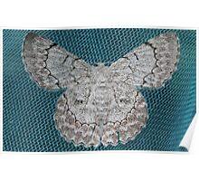 Mothly Angel Poster