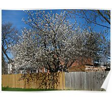 Spring is hanging over the fence Poster