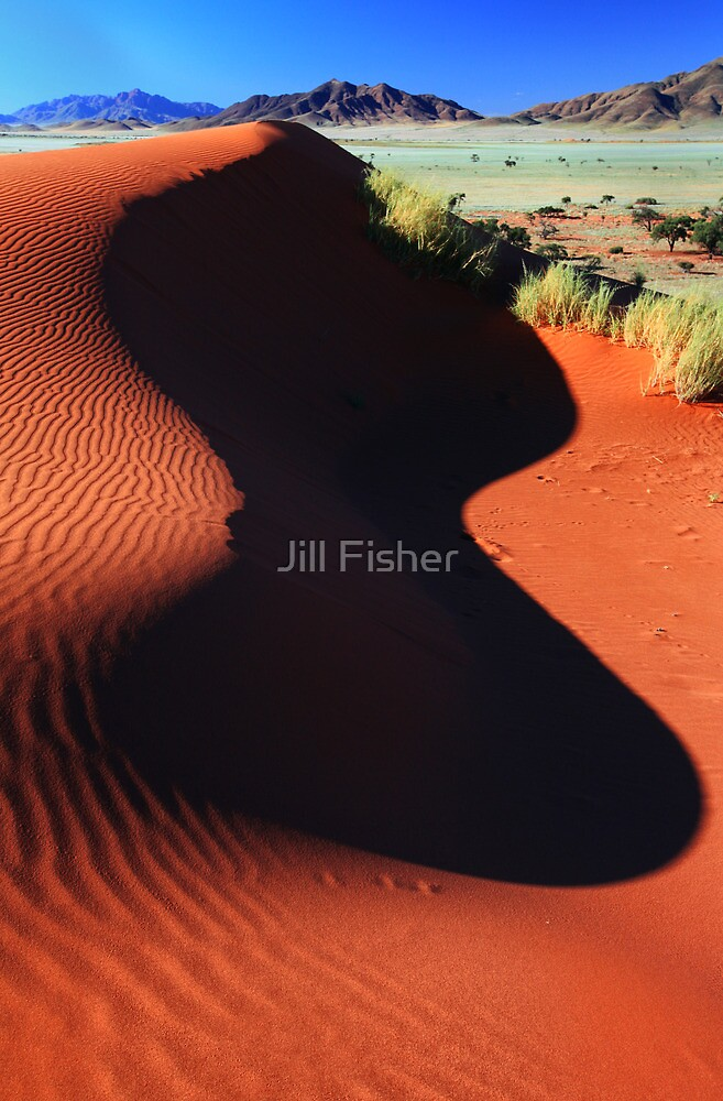 Shaped by the Wind and the Sun by Jill Fisher