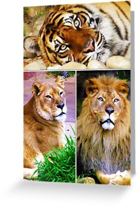 Lions & Tigers,Oh my! by Elenne Boothe